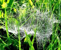 Netz, Gespinst, Spinnennetz, Perlen