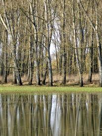 Fotografie, Hochwasser, Baum