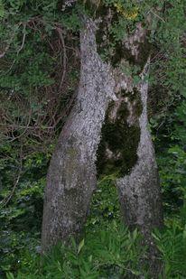 Baum, Fotografie, Akt, Frau