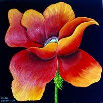Mohn, Mohnblumen, Rot, Blumen