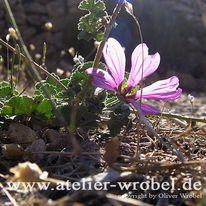 Fotografie, Blüte, Schmetterling, Makro