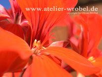 Pflanzen, Natur, Fotografie, Schmetterling