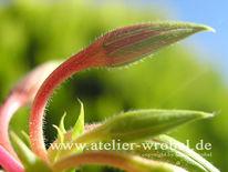 Natur, Pflanzen, Fotografie, Schmetterling