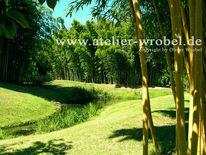 Landschaft, Natur, Pflanzen, Bambus