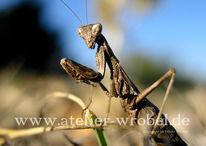 Fotogradfie, Tiere, Insekten, Natur