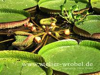 Fotografie, Schmetterling, Makro, Pflanzen