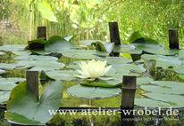 Seerosen, Blüte, Natur, Pflanzen