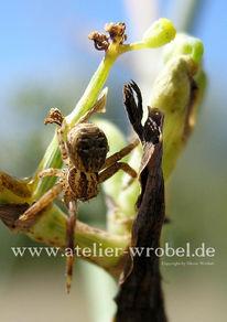 Fotogradfie, Spinne, Tiere, Natur