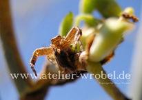 Spinne, Fotogradfie, Natur, Tiere
