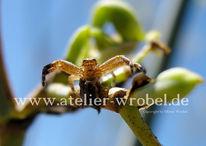 Fotogradfie, Tiere, Spinne, Natur