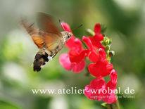 Schmetterling, Makro, Natur, Taube