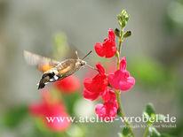 Tiere, Insekten, Taube, Schmetterling