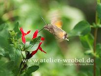Natur, Taube, Fotografie, Schmetterling