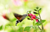 Taube, Natur, Fotografie, Schmetterling