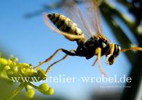 Makro, Insekten, Wespe, Natur