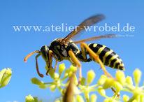 Wespe, Fotografie, Schmetterling, Makro