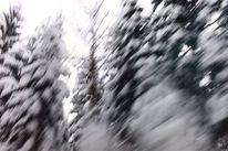 Schnee bäume, Fotografie, Abstrakt
