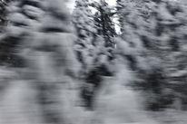 Schnee wald, Fotografie, Abstrakt