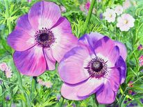 Lilablüte, Aquarellmalerei, Blüte, Blumen
