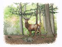 Wald, Hirsch, Aquarell