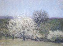 Blühen, Frühling, Wald, Baum
