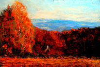 Himmel, Herbst, Farben, Wald