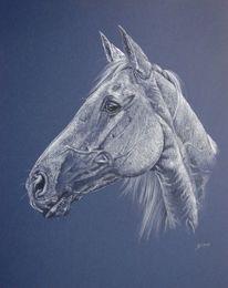 Pferdeportrait, Araber, Weisses pferd, Tiere