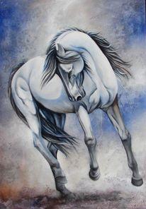 Pferde, Tierportrait, Schimmel, Weiß