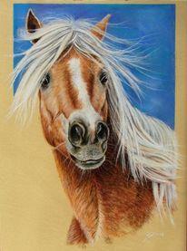 Pferdeportrait, Pastellmalerei, Tierportrait, Pferde