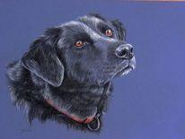 Tiere, Hund, Blackdog, Tierportrait