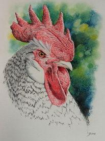 Vogel, Hähnchen, Huhn, Lancelot