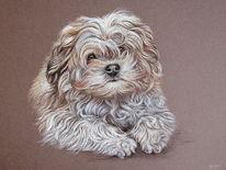 Tierportrait, Hund, Tiere, Pastellmalerei