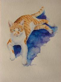 Orange, Katzenportrait, Katze, Tierportrait