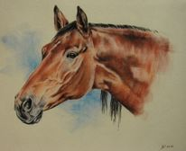 Pastellmalerei, Tierportrait, Velourpapier, Pferde