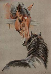 Shettlandpony, Pferdeportrait, Stall, Pferde
