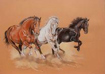 Pferde, Schimmel, Braun, Warmblutpferd