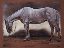 Pferdeportrait, Pastellmalerei, Tierportrait, Schimmel