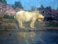 Eiszeit, Tiere in not, Eisbär, Fotografie