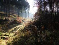 Schatten, Herbst, Wald, Licht