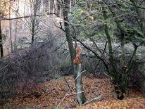 Herbst, Wanderung, Herbstwald, Licht