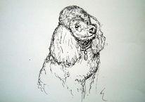 Illustration, Hund, Tiere, Zeichnung