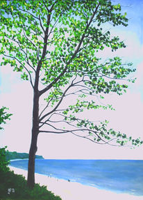 Meer, Steilküste, Baum, Jahreszeiten
