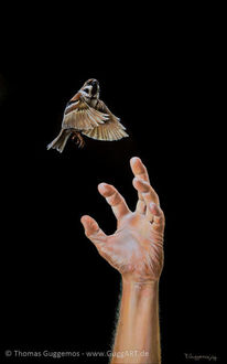 Hand, Greifen, Vogel, Spatz