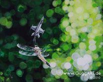 Libelle, Revier, Kampfjet, Unschärfe