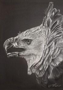 Höhenzeichnung, Pastellmalerei, Adler, Weißhöhung