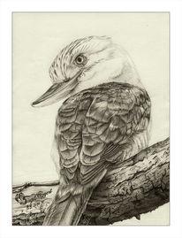 Bleistiftzeichnung, Dacelo leachii, Eisvogel, Haubenliest