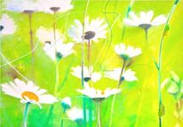 Margerite, Grün, Gelb, Blumen