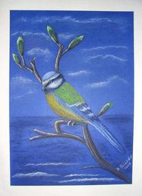 Knospe, Pastellmalerei, Blaumeise, Malerei