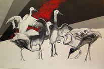 Vogel, Rot schwarz, Weiß, Tiere