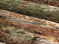 Baumstamm, Holz, Rinde, Struktur